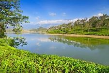 Beautiful Munnar Views