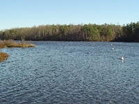 Beaverdam Swamp Reservoir