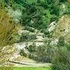 Beehive Creek Walkway - North Island - New Zealand