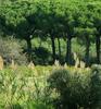 Begur Wildlife Sanctuary - Wayanad