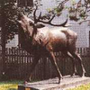 Belling Stag Bronze Sculpture
