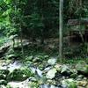 Belum Forest Reserve - Perak
