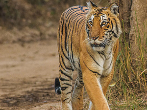 Jim Corbett National Park Adventure In Luxury