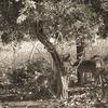 Betalghat Wildlife Safaris