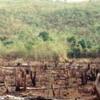 Bhamragarh Santuario de Vida Silvestre