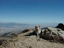 Biffon Desert Peak