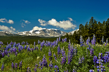 Big Horn Mountains - Wyoming