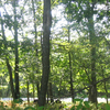 Woods At Big Meadows