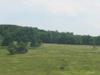 Big Meadows In Summer