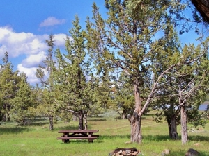 Gran Campground Sage