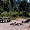 Big Sandy Campground