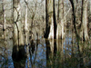 Big Thicket