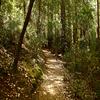 Big Tree Loop Trail
