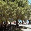 Big Trees Picnic Site