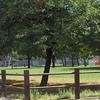 Bingfield Park