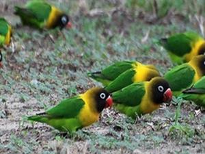 Wildlife and Bird Watching Safari