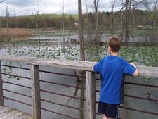 Birders At Beaver Marsh
