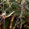 Bird Near Malik Talao - Ranthambore