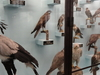 Ornithological Display (1 Of 2)