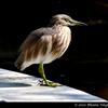 Bird Waiting Fish