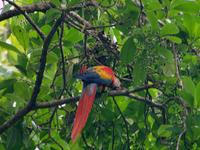 Bird Watching Tour-drake Bay, Costa Rica