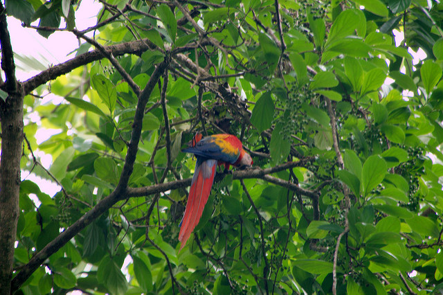Bird Watching Tour-drake Bay, Costa Rica Photos
