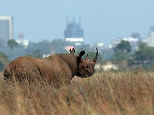 Nairobi City Tours - Nairobi National Park Tour