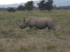 Black Rhino Lake Nakuru