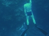 Blue  Hole  Sinai   Free  Diving