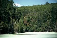 Blue Lake Tikitapu - North Island - New Zealand