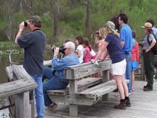 Boardwalk At Beaver Marsh