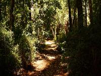 Boat Creek Trail