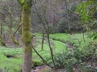 Boggart Hole Brook