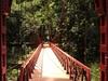 View Of Bogor Botanical Gardens