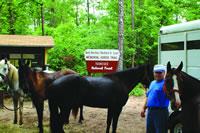 Bold Destiny Memorial Horse Trail