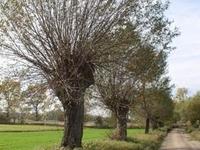 Boleslaw Papi Reserve