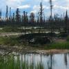 Boreal Forest Behchoko
