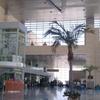 Borg El Arab Airport Check In Area