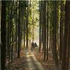 Bori Santuario de Vida Silvestre