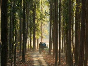 Bori Wildlife Sanctuary