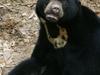 Bornean Sun Bear Conservation Centre - Sabah
