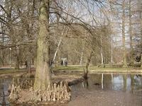 Jardín Botánico - Szeged