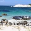 Boulder Beach SA Penguin Colony