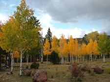 Boulder Mountain Fall Leaves