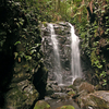 Gondwana Rainforests