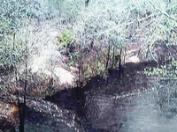 Bradwell Bay Wilderness