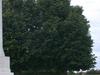 Bretteville  Sur   Laize  Cemetery  Cross Of  Sacrifice
