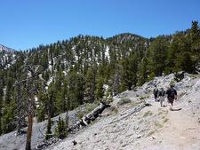 Bristlecone Trail Hikers - Nevada
