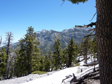 Bristlecone Trail - Nevada