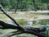 Habitat Africa - Giraffe Enclosure